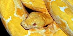 Большой змей во сне