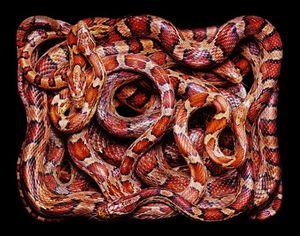 Если снится клубок змей