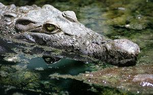 Крокодилы во сне