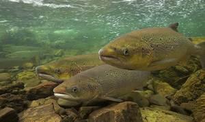 Сон о рыбе по цыганскому соннику
