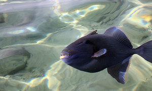 Китайский сонник про рыбу