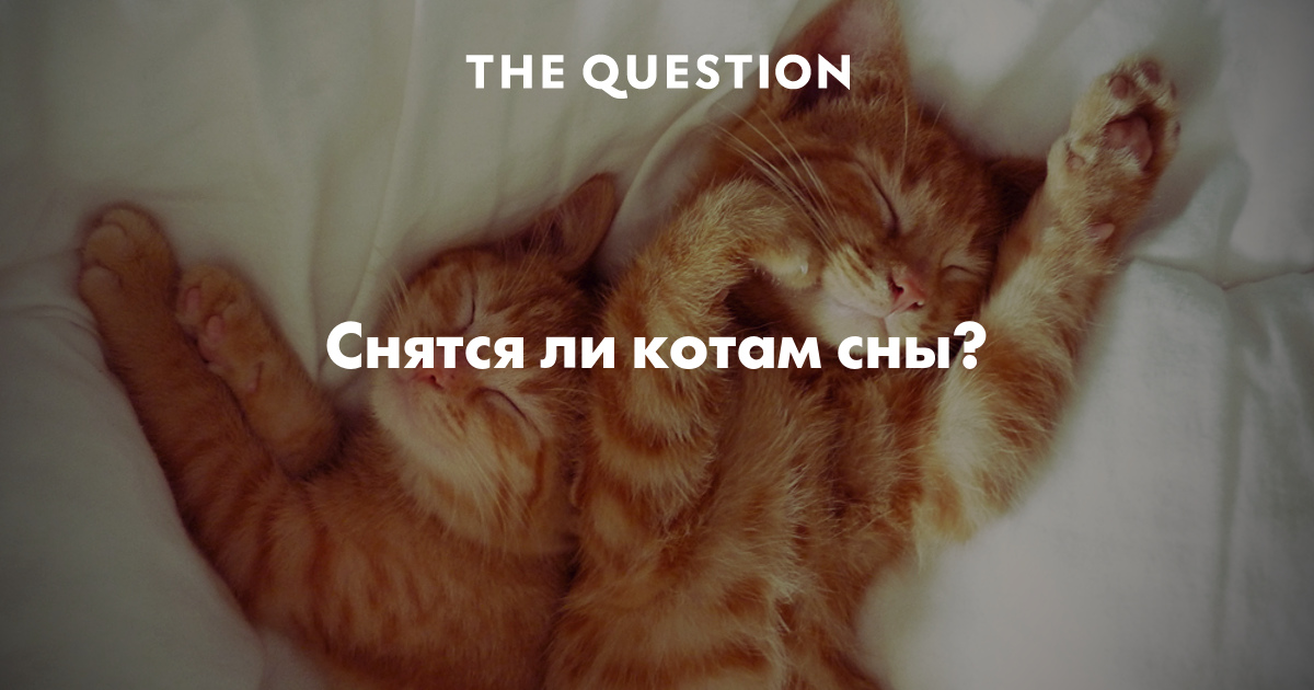 К чему снится котенок во сне по соннику?