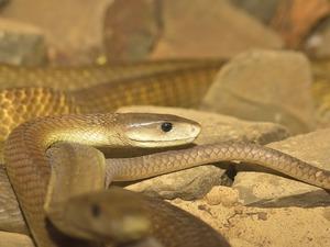 Значение змеи для девушки