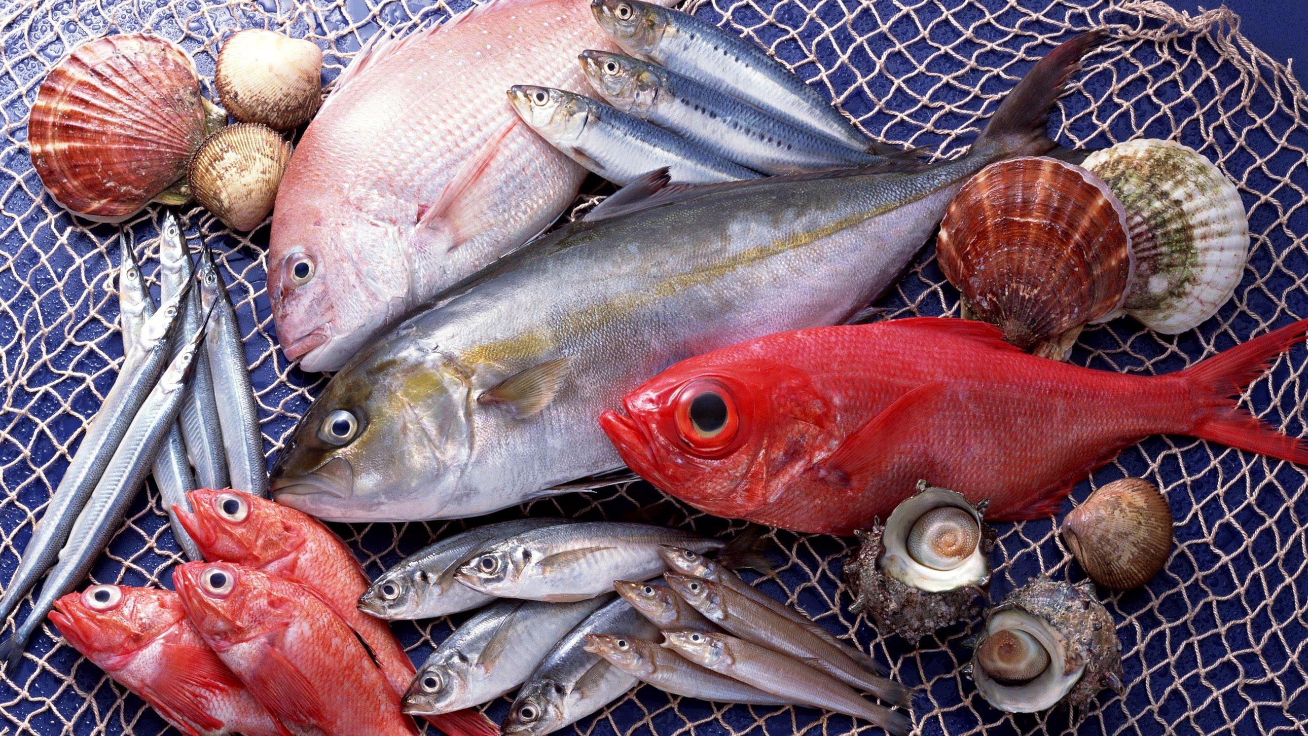 К чему снятся аквариумные рыбки: толкование значения сна по различным сонникам для мужчин и женщин рекомендации