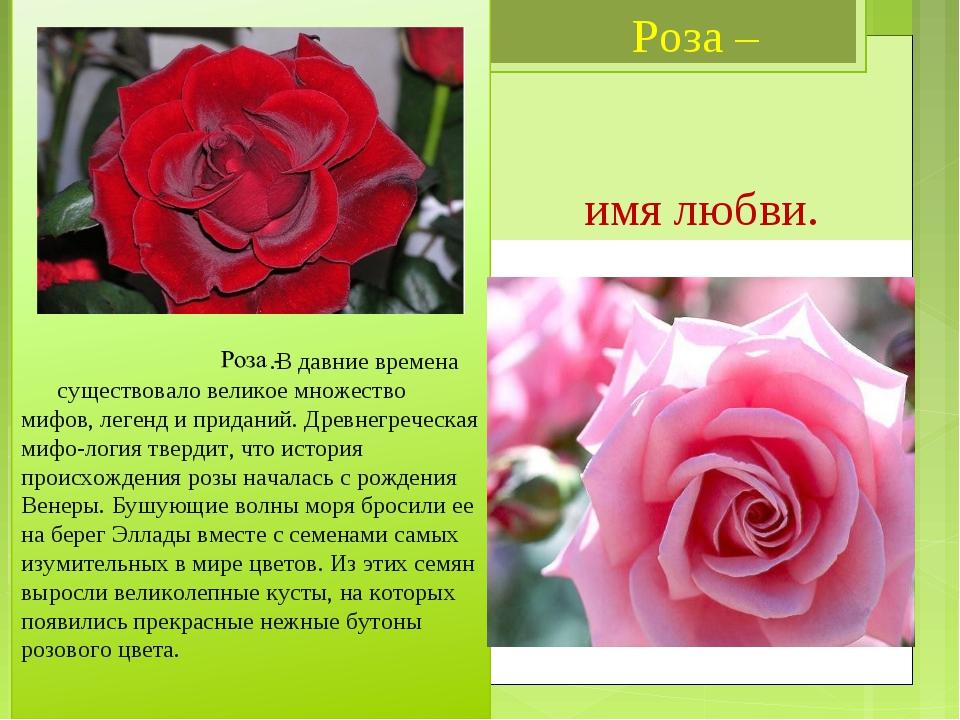 Картинка с надписью розалия, ленточками