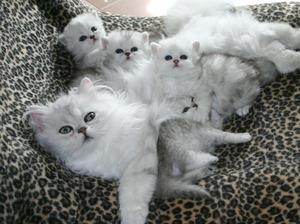 К чему может сниться кошка