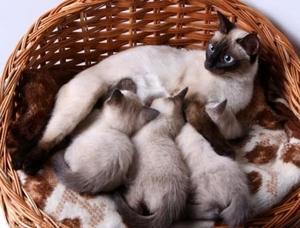 Сниться кошка с котятами по версии разных сонников