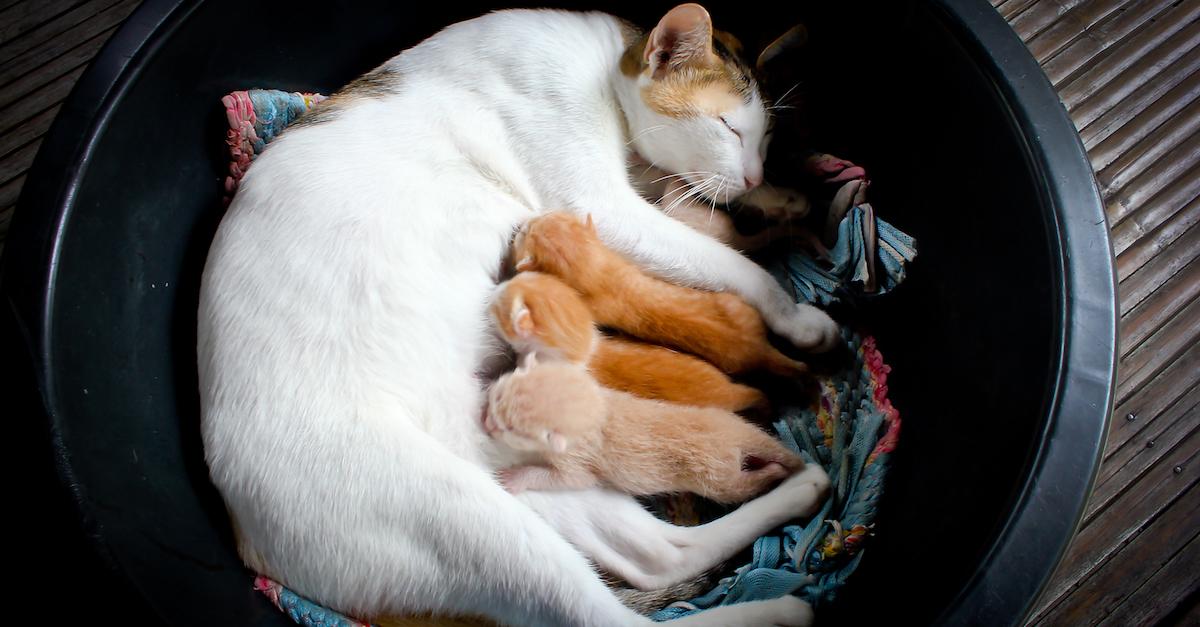 Если вы взяли бродячую кошку в свой дом – вам необходима поддержка близких людей, вероятно, вы её не получаете и обиды накапливаются.