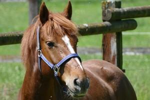 Жеребец на конном дворе