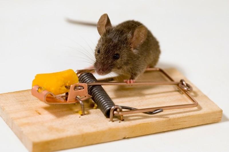 сонник толкование дохлые крысы