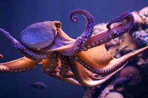 К чему видеть во сне осьминога