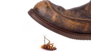 К чему снится убивать таракана