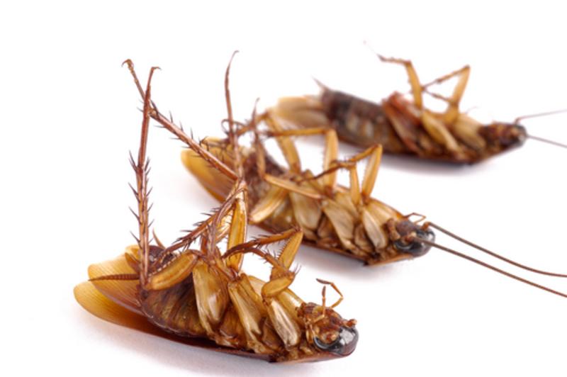 К чему снятся убитые тараканы