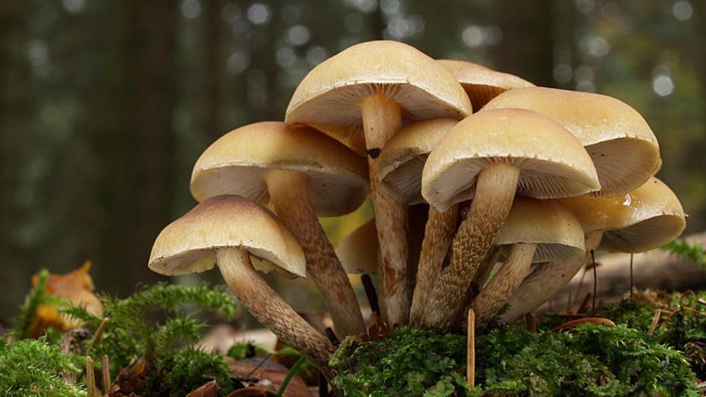 к чему снится знакомый парень с грибами