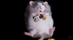 Крысы во сне зачастую обозначают бережливость и запасливость