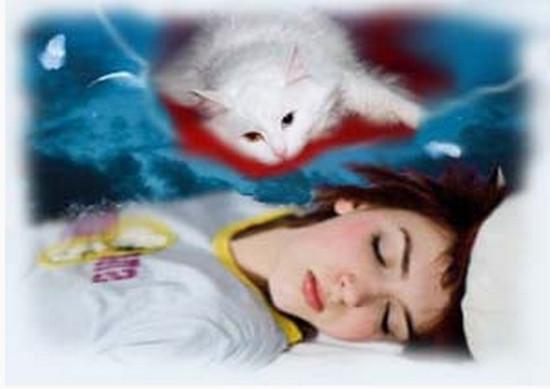 Очень грязный и худой котенок, которого девушка гладит, указывает на то, что она неожиданно станет жертвой чужой глупости.