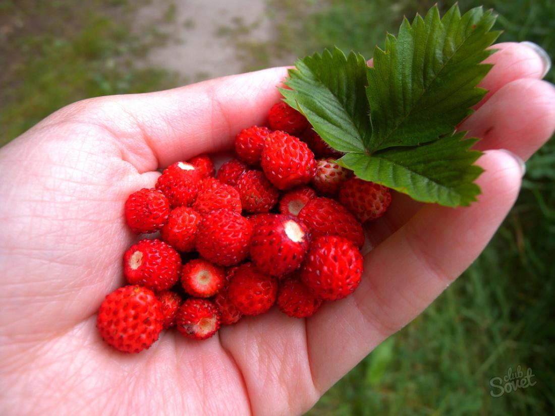 Но чтобы более точно понять, что предвещают в реальной жизни ягоды красного цвета нужно обратить внимание на их вид.