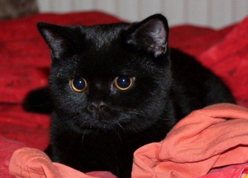 К чему снится черный котенок - толкования по соннику