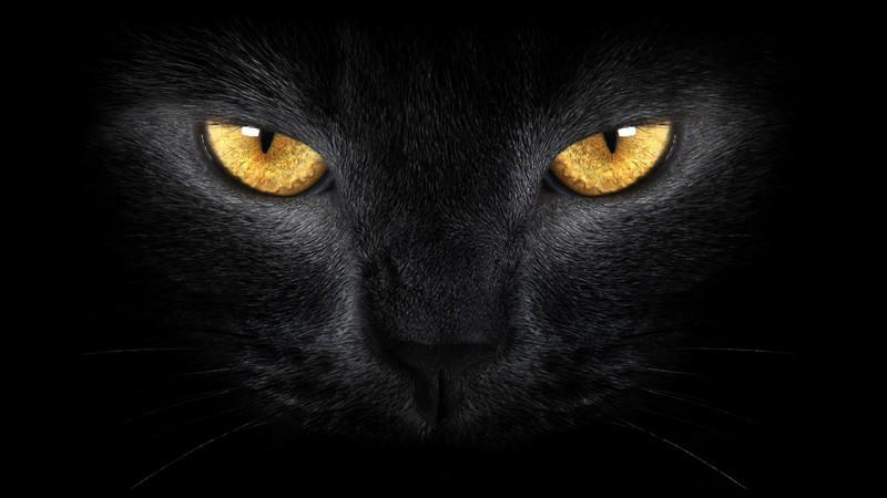 К чему снится черный котенок