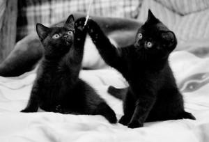 К чему приснился черный котенок