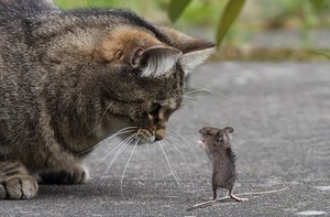 Кот поймал мышь сонник