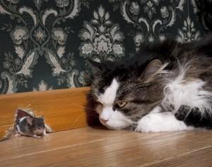 К чему снятся мыши и коты