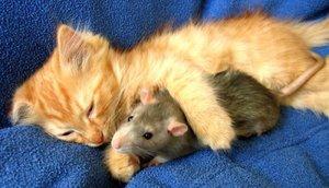 Если происходит погоня кота за мышкой, к чему