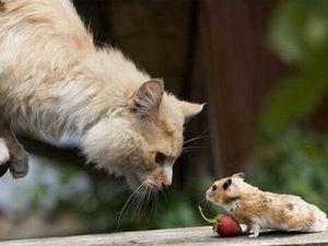 Как ведут себя кот и мышь