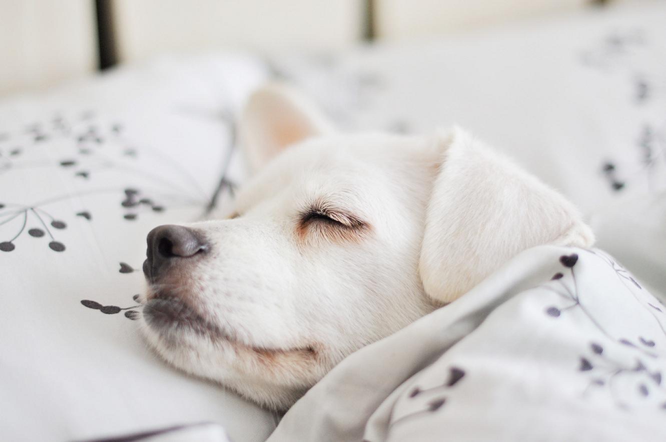 К чему снится маленькая собачка