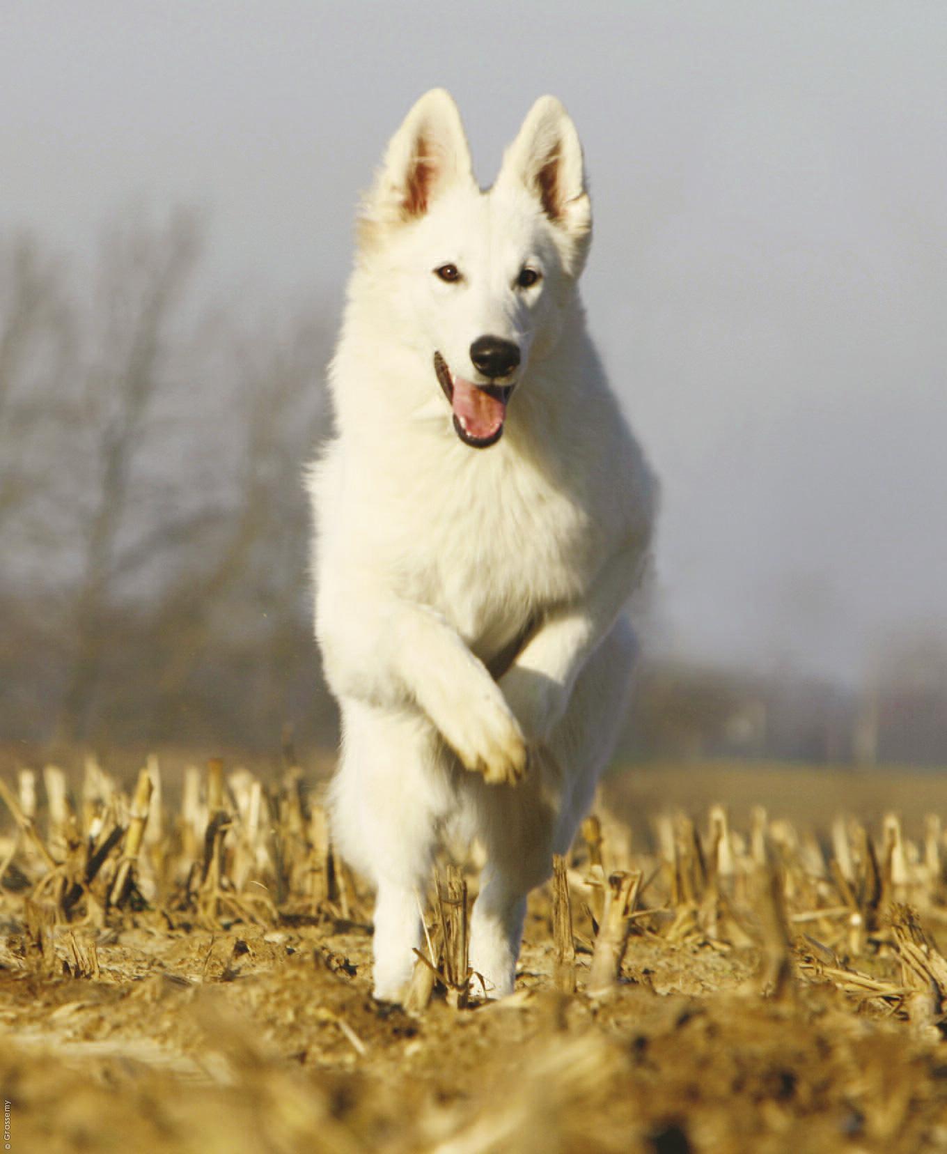 Почему приснилась злая собака — нюансы толкования