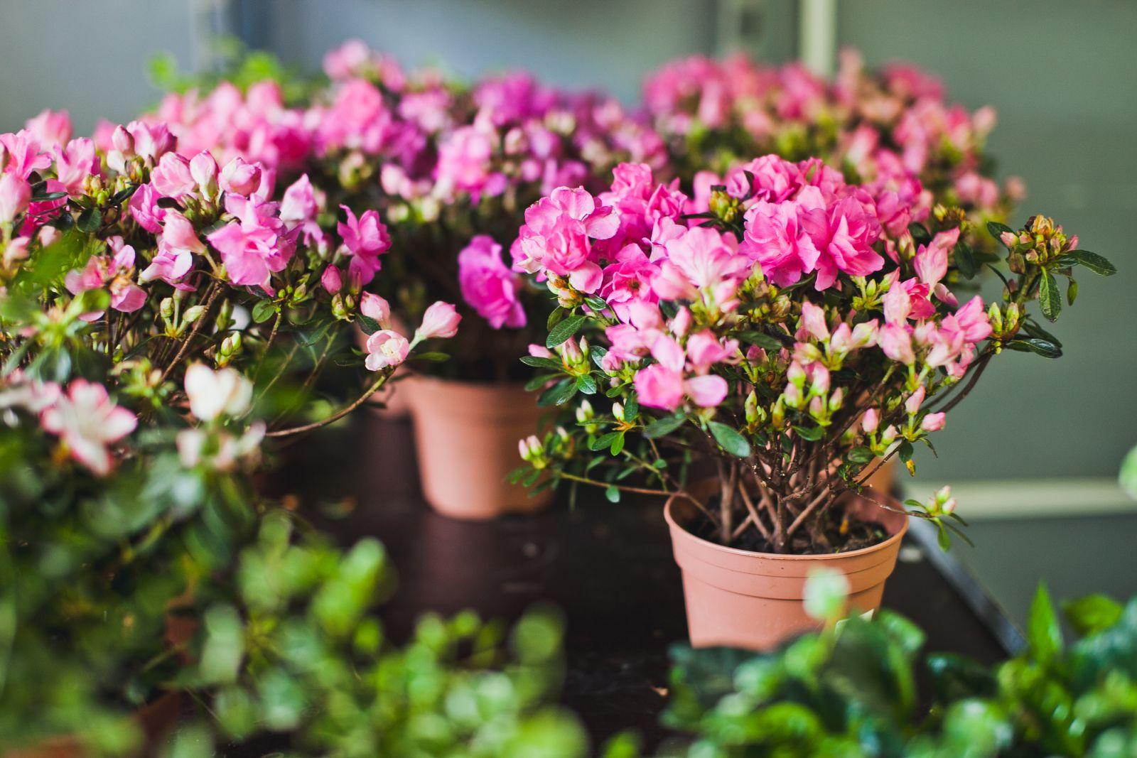 Цветы приснились к чему