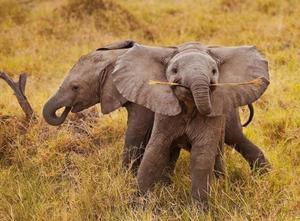 Сон о слоненке