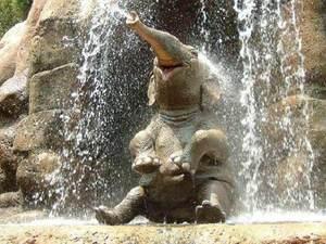 Слоненок во сне: толкование