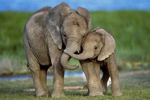 Толкование сна о слоненке по различным сонникам