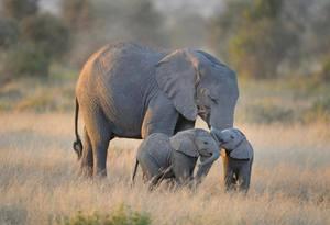 Как толковать сон о слоненке