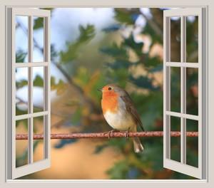 Примета, птица стучит в окно