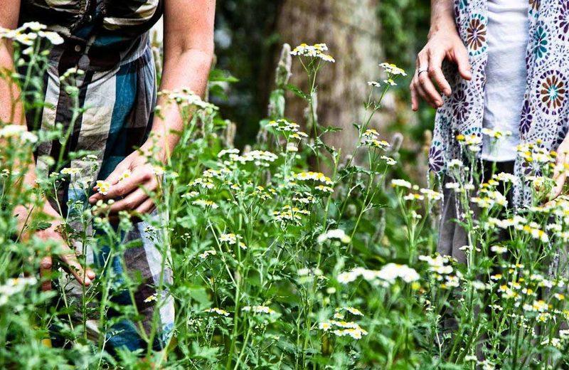 Приснилась зеленая трава нюансы толкования по сонникам