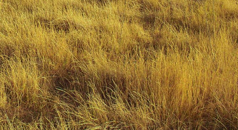 Сухая или выжженная трава во сне