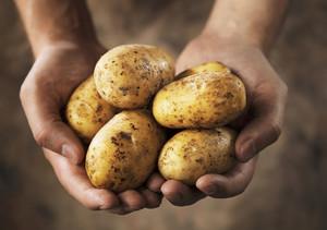 Если снится что сажаешь картофель 543